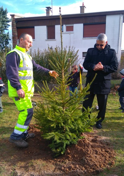 170213 plantations arbres maternelle 3